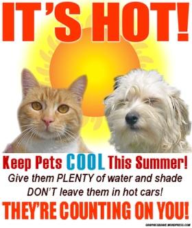 keep pets cool1